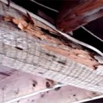 Drywood termite damage and treatment