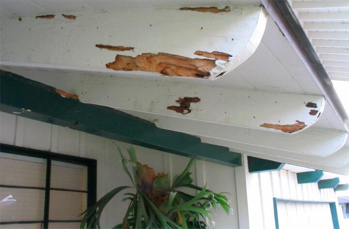 drywood termite damage