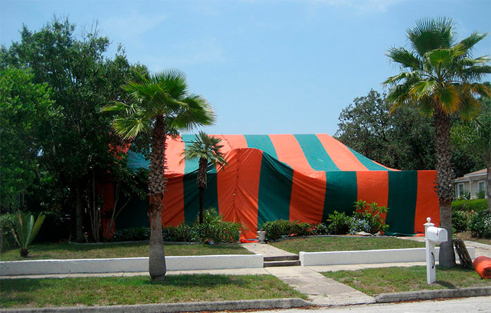 drywood termite fumigation