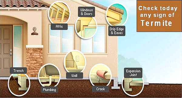 signs of termites in house