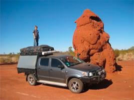 termite-nests