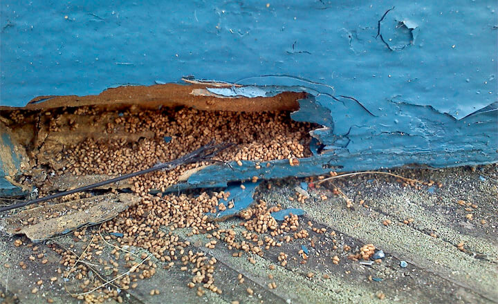 pictures of termite damage