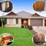 Termite inspection, free guide to the abatement