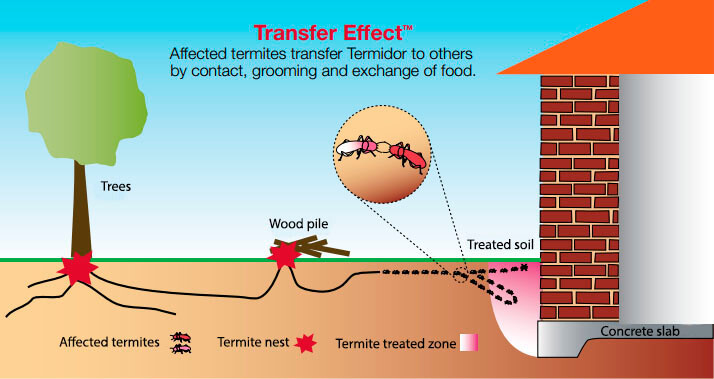 termite treatment options