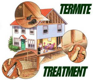 termite_treatment_options