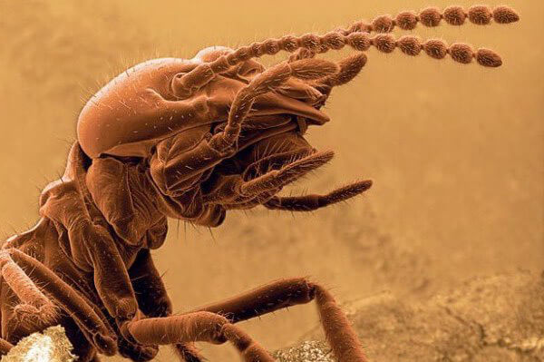 wood termites